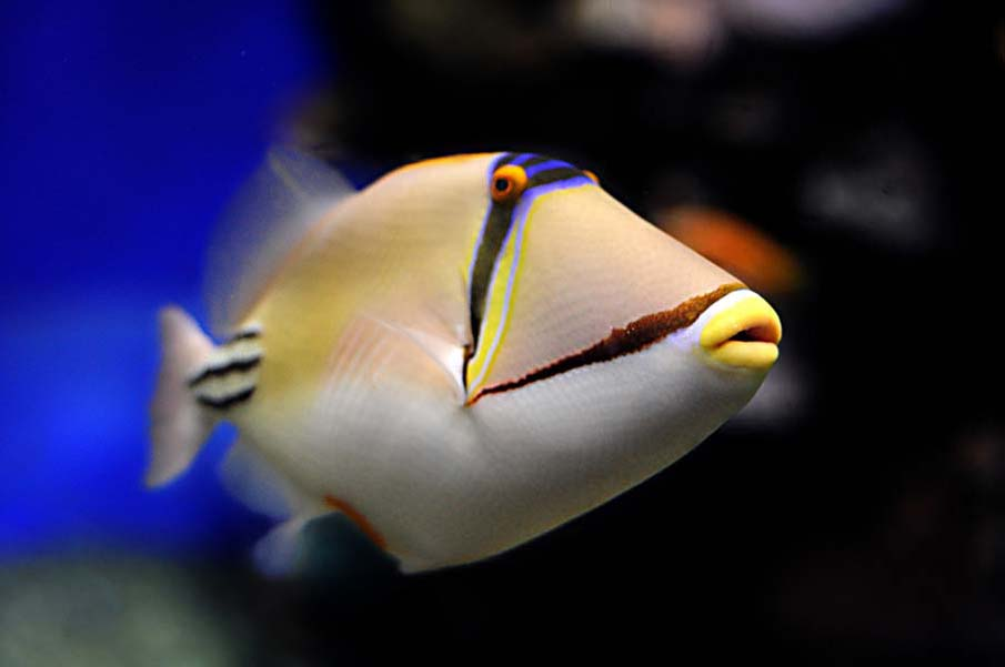 фото экзотические рыбки