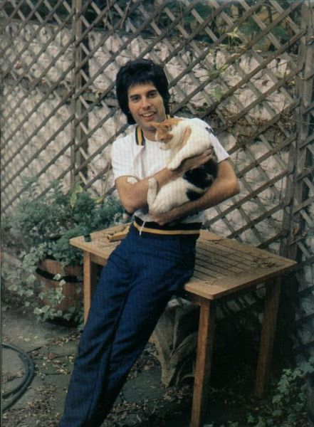 http://dobriiden.ru/sites/dobriiden.ru/files/great_photos_of_legendary_freddie_mercury_5.jpg